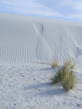 White Sands National Monument : Leeward side of dune slides away when the angle gets steep enough.