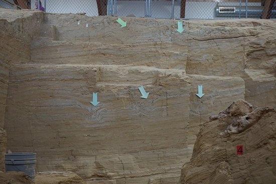 Mammoth Site of Hot Springs : Arrows indicate Mammoth footprints when the soil was soft