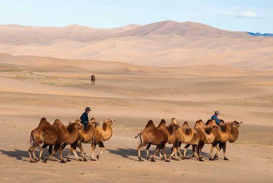 Big Mongolia Travel : Desert Mongolian herders in the South Gobi. Our clients did a home-stay with these unique people