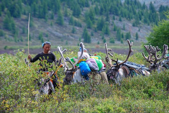 Big Mongolia Travel : In the North of Mongolia, live the Reindeer people. An isolated and unique people.
