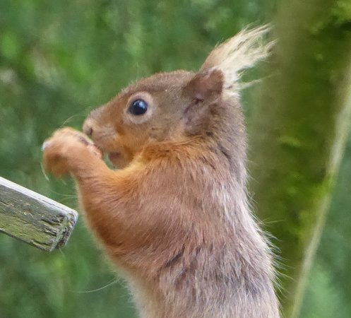 Eskrigg Nature Reserve: Tufty !