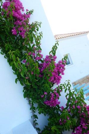 Atrium Prestige Thalasso Spa Resort and Villas: On our veranda, gorgeous blossom