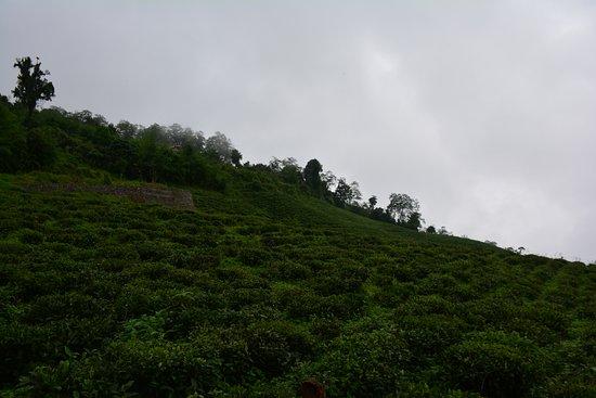 @ Temi Tea Garden