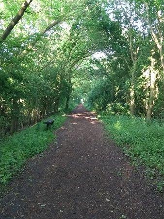 Eastrington Ponds: Disused railway
