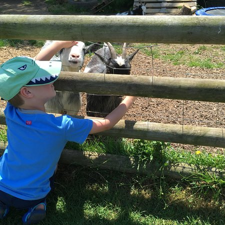 Prickly Ball Farm: Lovely few hours spent enjoying the animals, play areas & food