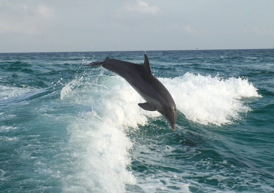Sea Screamer: One of many of my dolphin shots