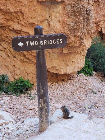 布赖斯峡谷照片