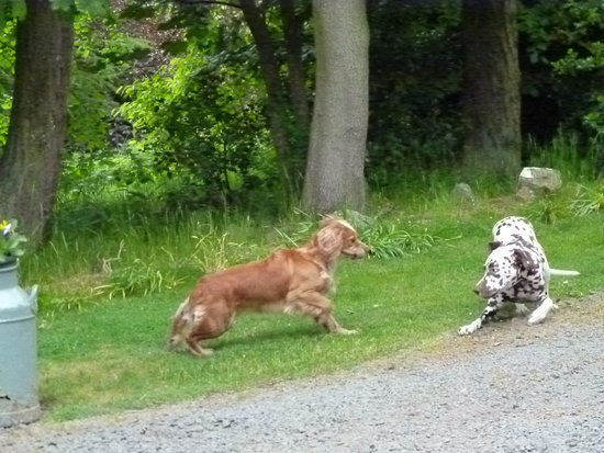 Whitehouse Country House: our doggies had fun too!