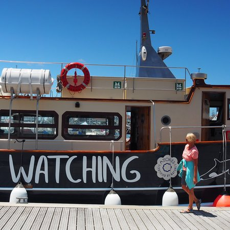 MobyDick Tours - Whales & Dolphins Watching照片