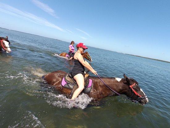 C Ponies Beach Horses照片