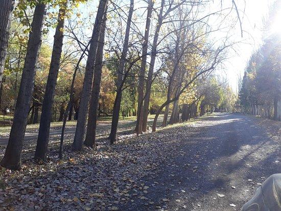 Villa Regina, Argentyna: Camino arbolado