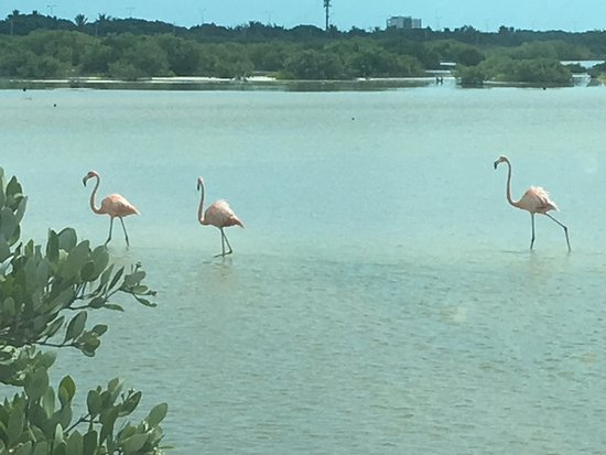 Sergio's Tours: flamingo reserve