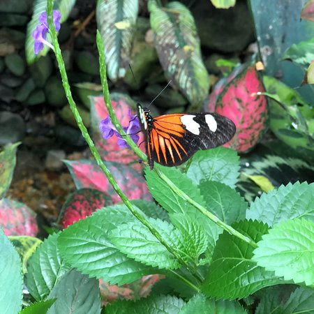 Key West Butterfly and Nature Conservatory ภาพถ่าย