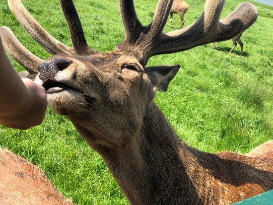 Snettisham Park: Deer safari