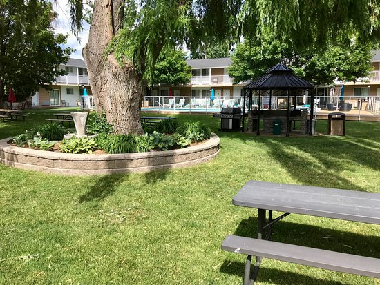 Best Western Inn at Penticton: Courtyard with cold outdoor pool and huge trees
