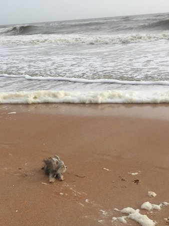 Seashell Suites Resort: Buddy on the beach, stormy day