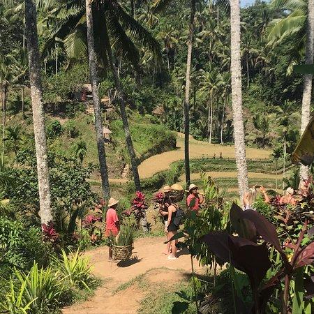 巴厘岛最佳之旅:瀑布,火山,自然风光和神庙照片