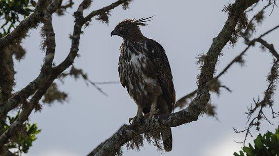 雅拉国家公园照片