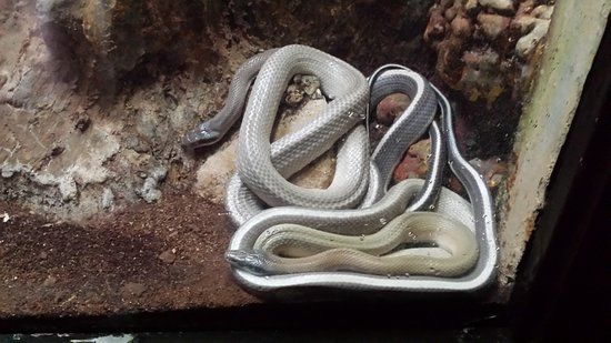 Birmingham Zoo: snakes!