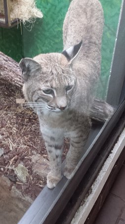 Birmingham Zoo: one of several cats