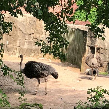 林肯公园动物园照片