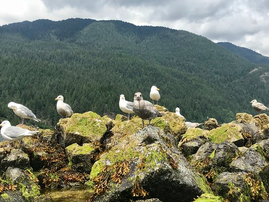 Deep Cove: Gulls on one of the islands (taken from Kayak)