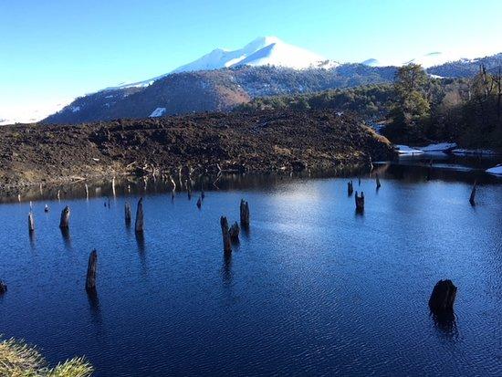 Araucania Region, Chile: Lagoon of submerged trees