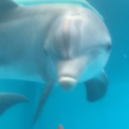 Clearwater Marine Aquarium ภาพถ่าย
