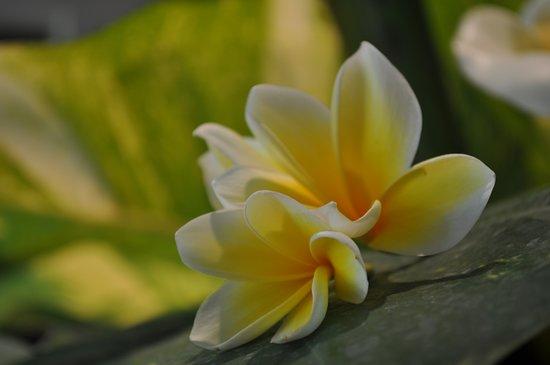 The Pavilions Bali ภาพถ่าย