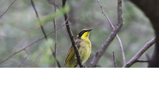 Coorongooba Campground: Capertee Valley is one of the worlds best birding areas