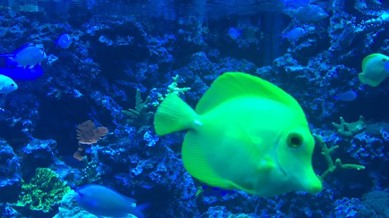 Sea Life Brighton : Fish