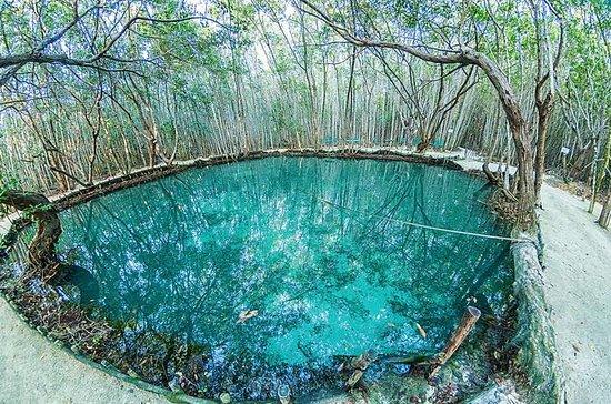 El Corchito Cenotes Natural Reserve...