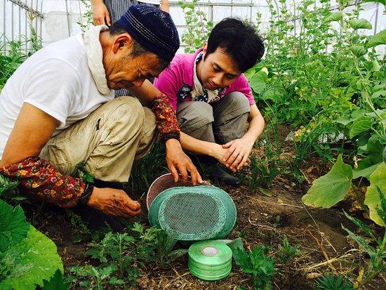 Dana Village : Farming experience 農作業体験