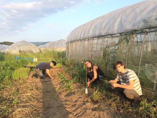Dana Village : Farming experience農作業体験