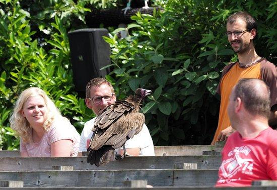 Rotterdam Zoo : Bird show aka Vrije Vlucht Voorstelling