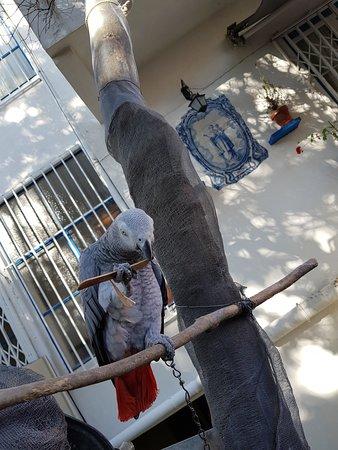 Fundacao Amalia Rodrigues Casa Museu照片