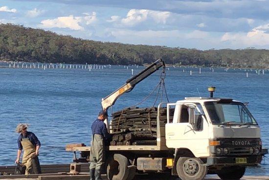 Broadwater, Australia: Oyster farmers