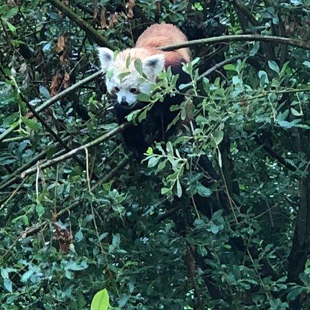 ZooParc de Trégomeur Photo