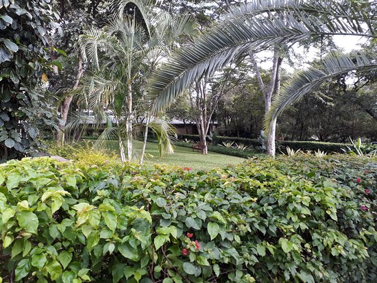 Ufulu Gardens: The air is very fresh here with all the greenery