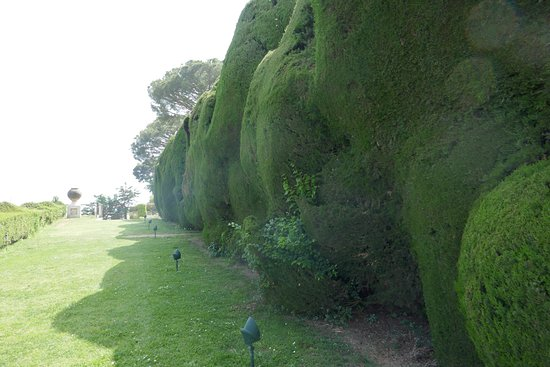 Villa Cimbrone Gardens : Impressive yew hedge, but note the non-yew bits establishing themselves