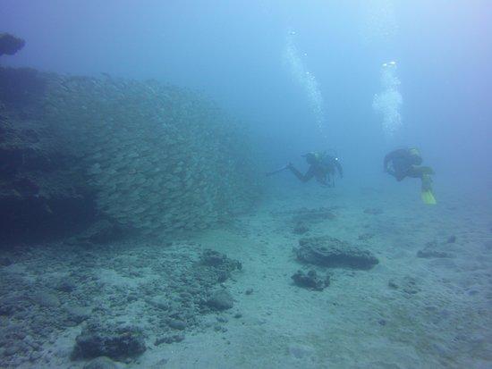 Top Diving Gran Canaria: Divers at Pasito Blanco Reef
