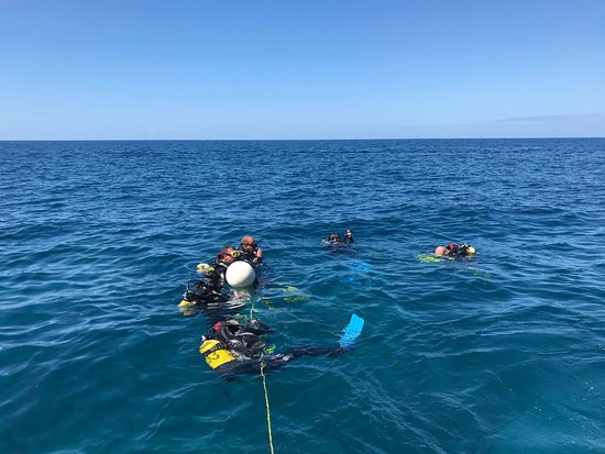 Top Diving Gran Canaria: PADI Courses at Arguineguin Reef