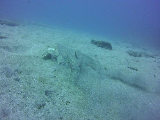 Top Diving Gran Canaria照片