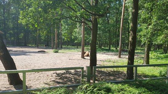 Animal Farm ภาพ