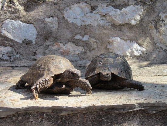 Marmaris Museum : на территории водятся черепахи
