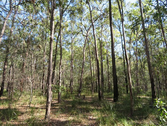 Coombabah Lakes Conservation Area: Nice area
