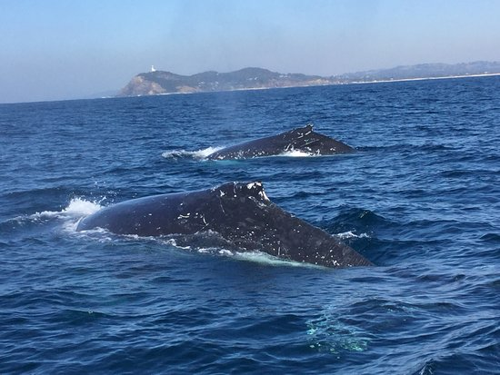 Blue Bay Whale Watching : Double sighting lovely