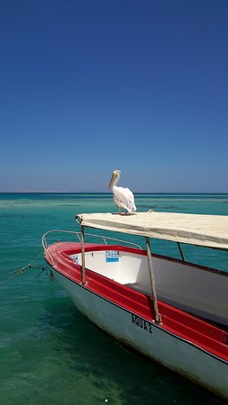 Panorama Bungalows Aqua Park Hurghada: Resident pelican