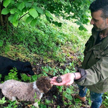 Siena Tartufi (truffle hunting): #trufflehunting and #winetasting