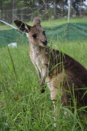 Mapleton Springs: Learn about caring for our native wildlife